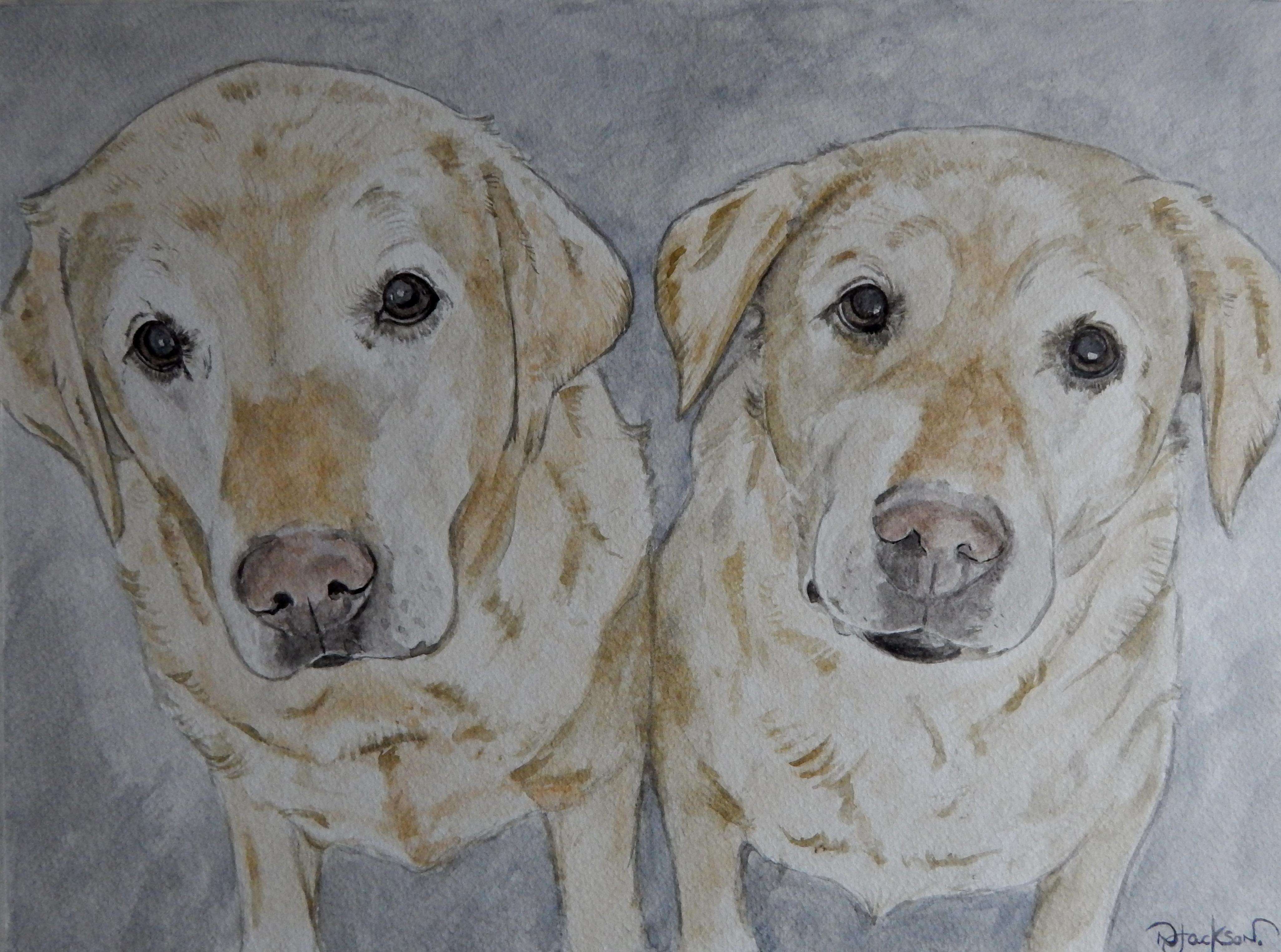 Labradors portrait