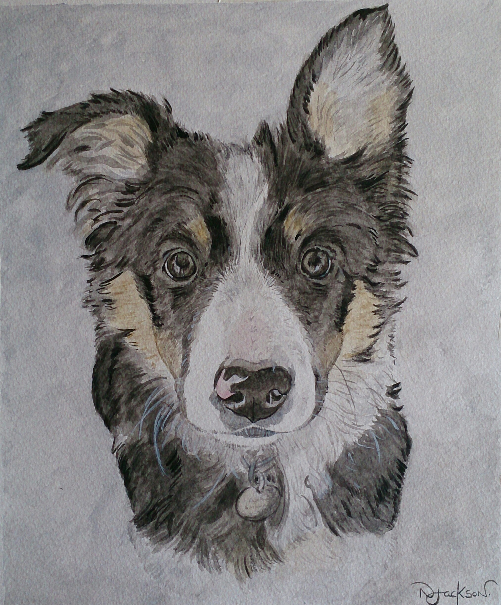 Border collie watercolour portrait