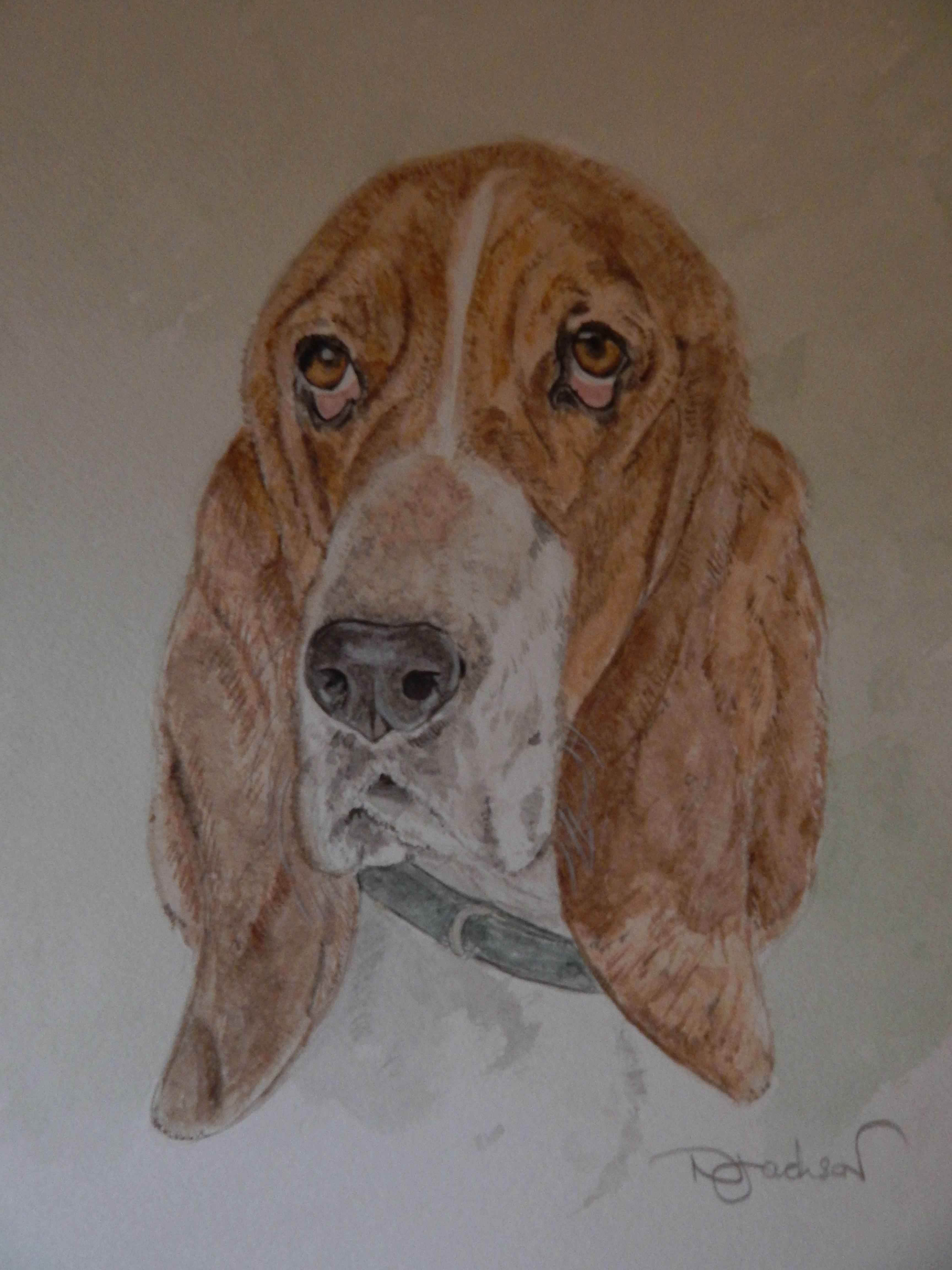 Basset Hound watercolour