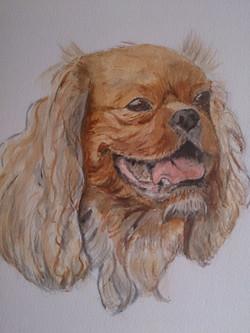King Charles dog portrait