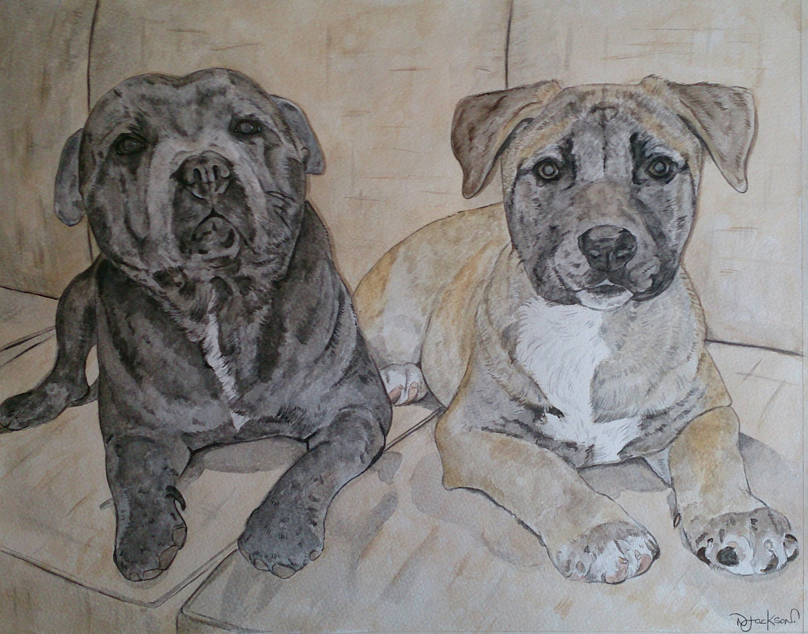 Blue staffy and Bulmastiff portrait
