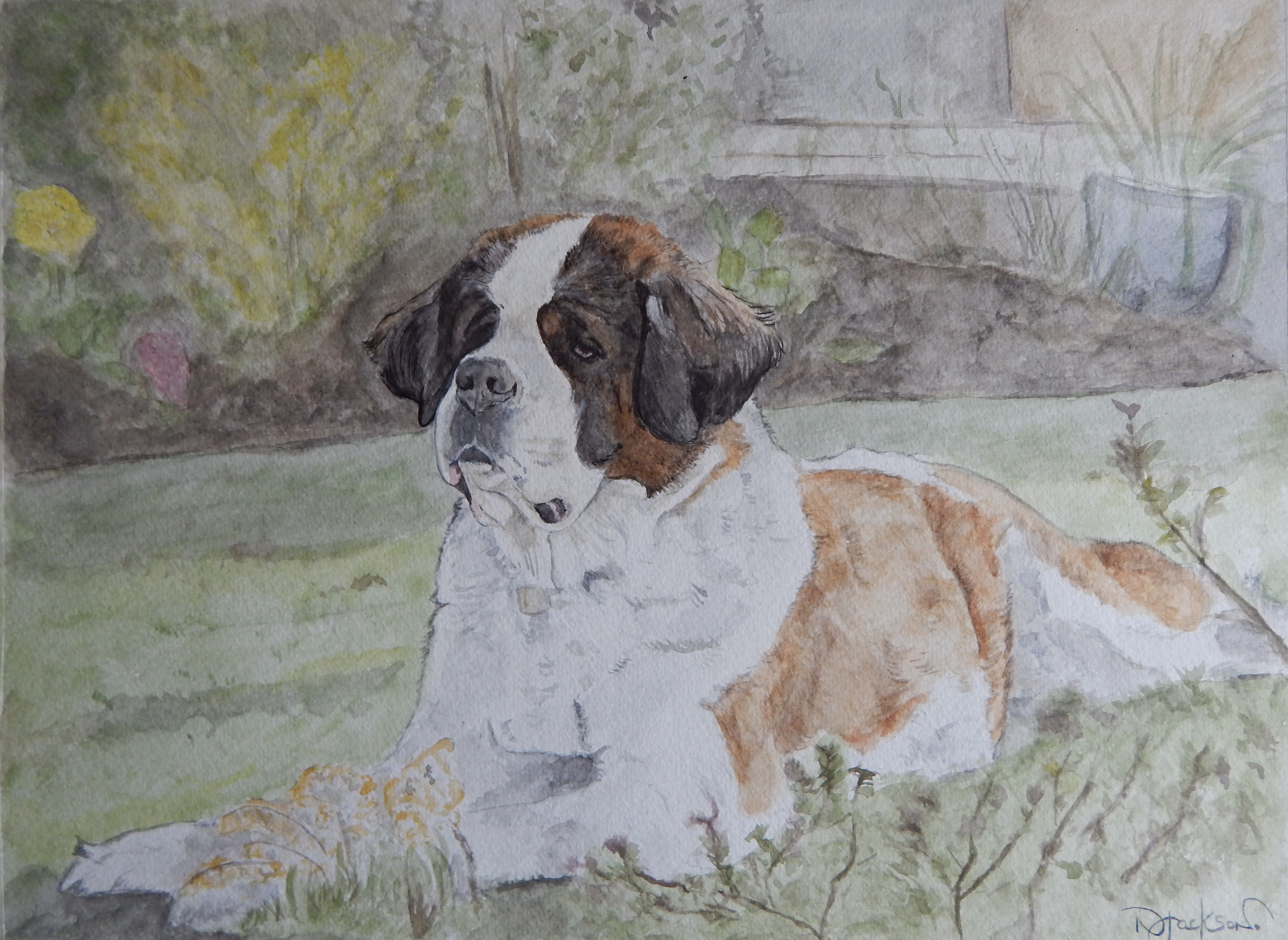 St Bernard watercolour portrait
