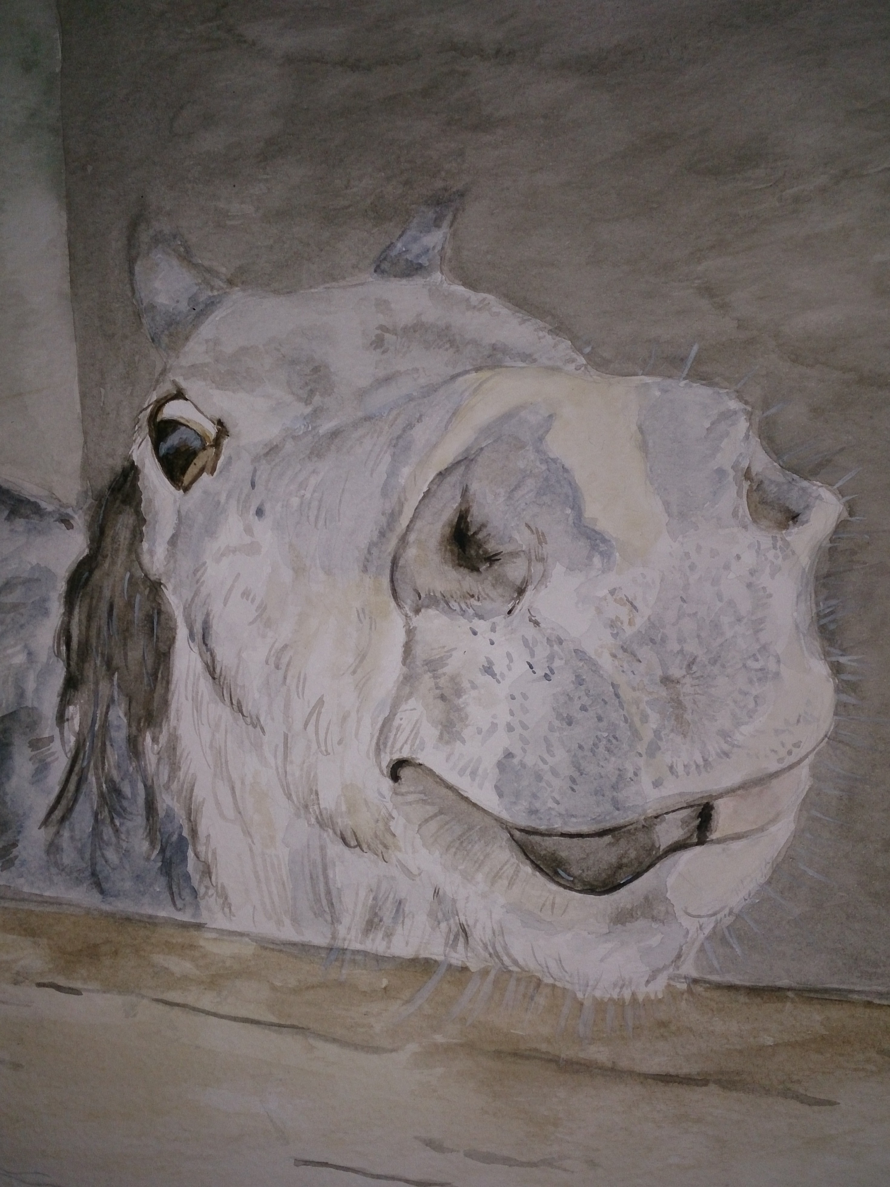 Nosey Zeb horse watercolour