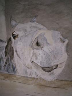 nosey horse portrait