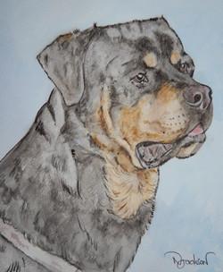 rotwieler dog portrait