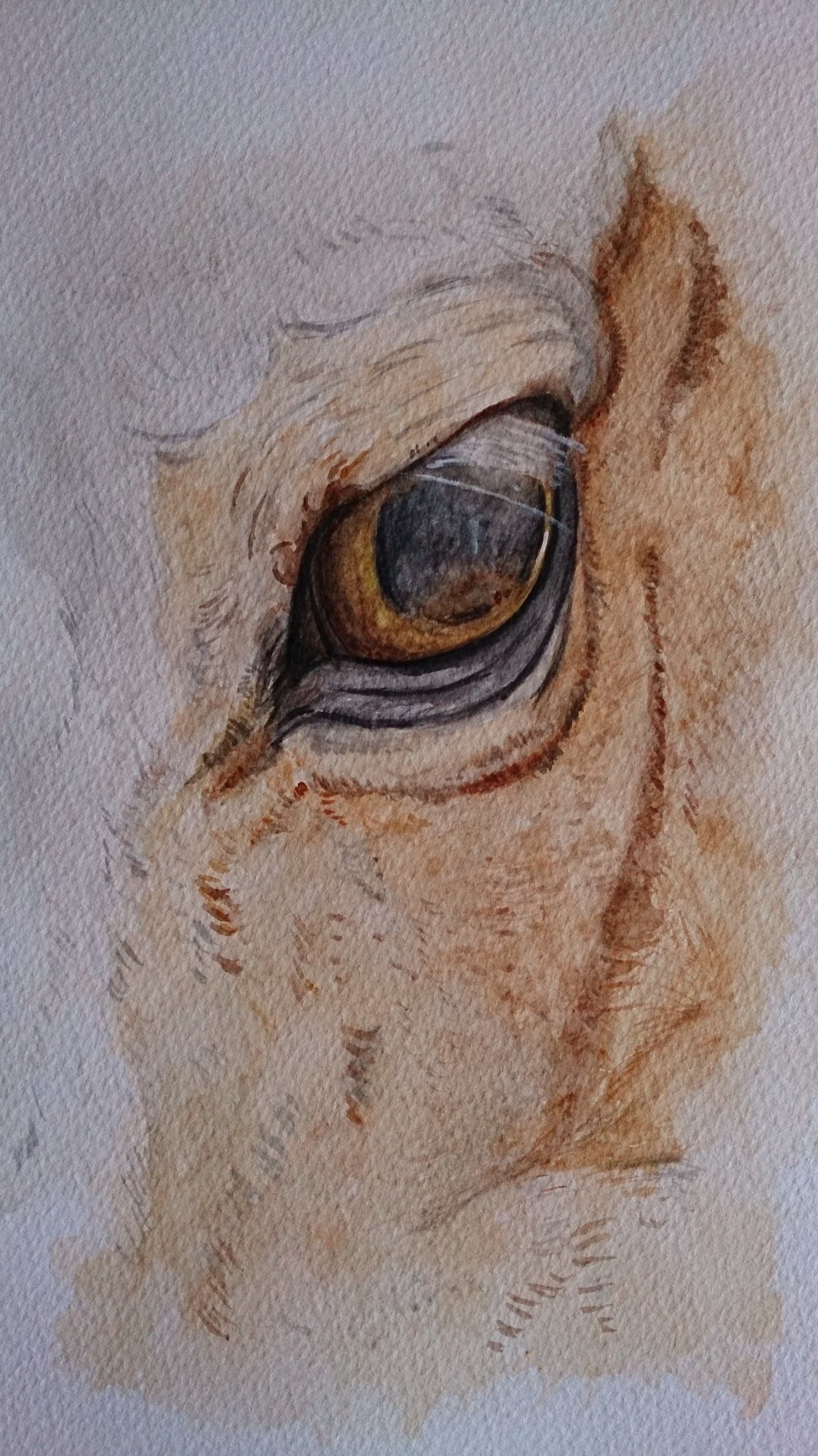 horse eye watercolour painting