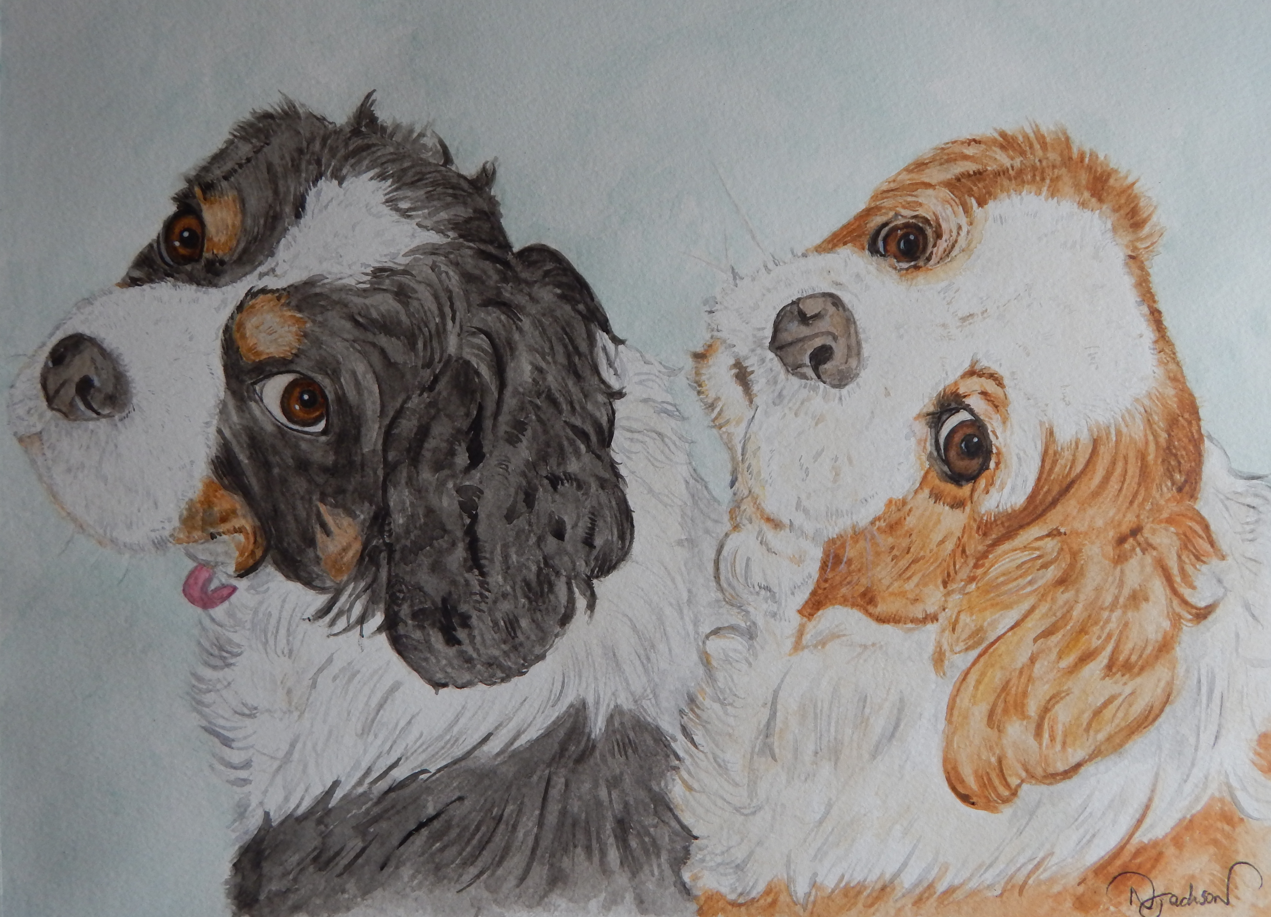 King charles spaniel watercolour of