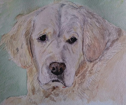 Golden retriever watercolour portrat