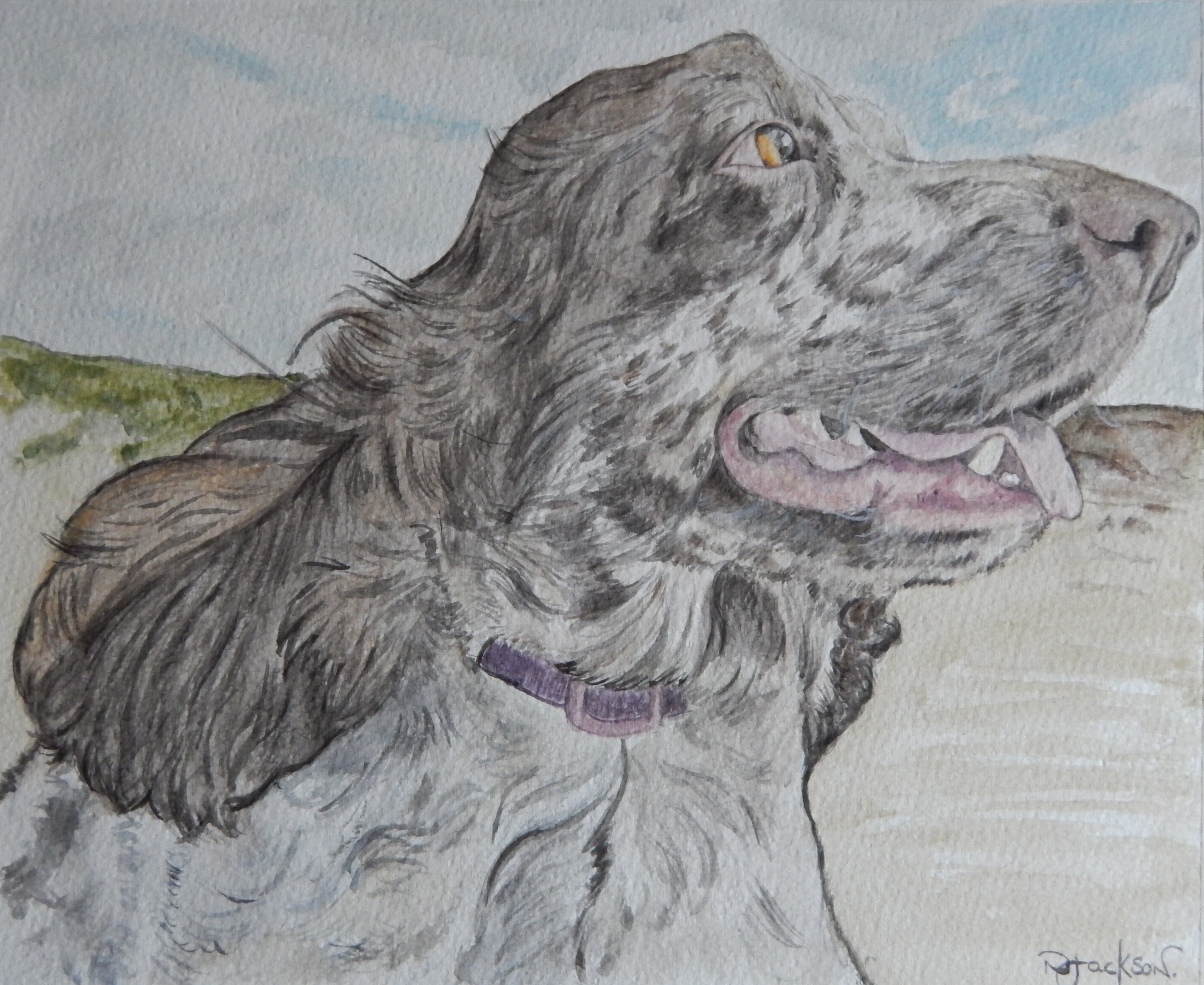 Spaniel on beach portrait