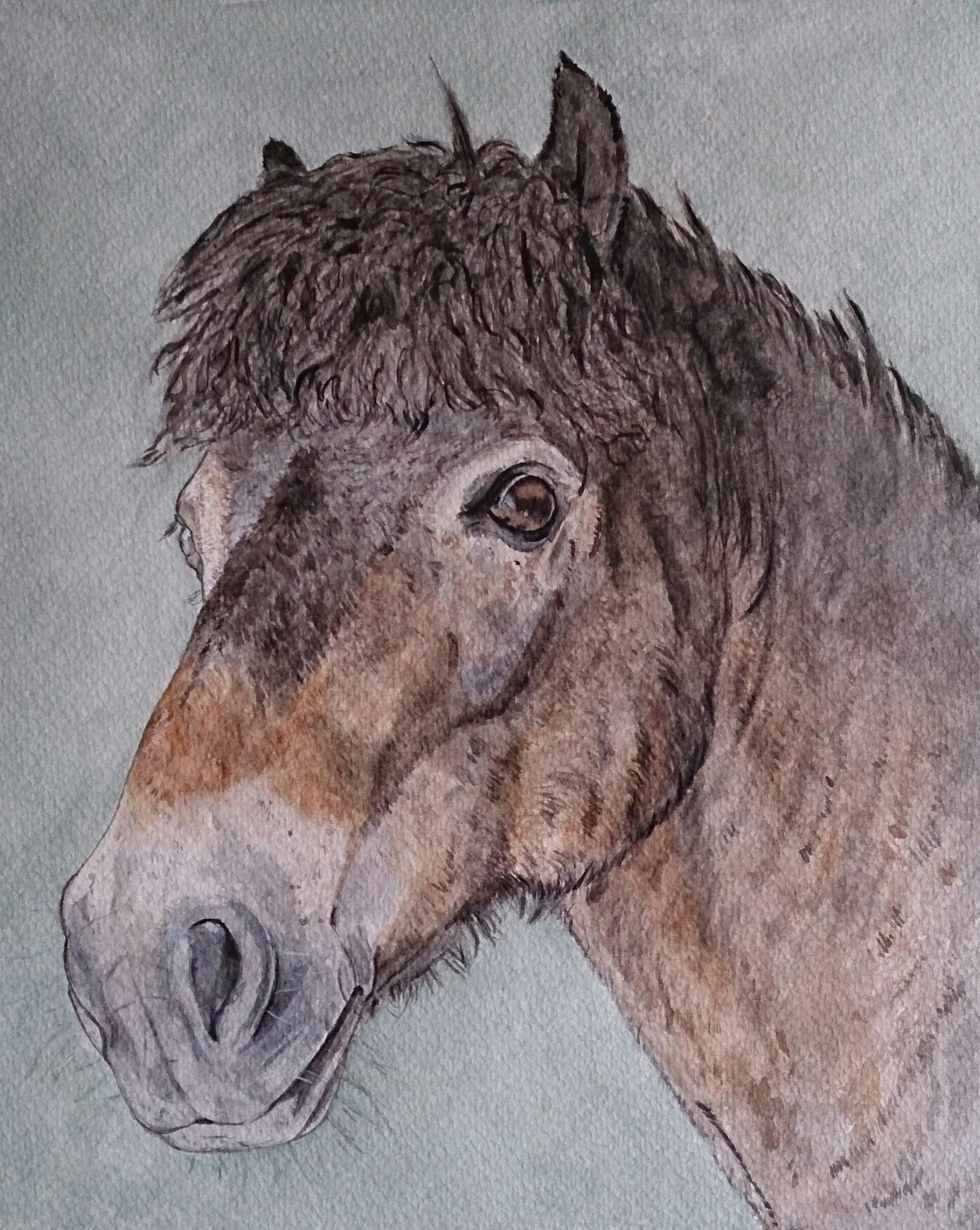 Mikey the Horse Portrtait.