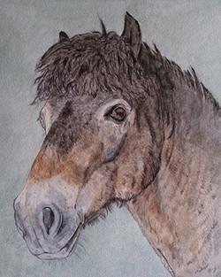Mikey Horse Portrait