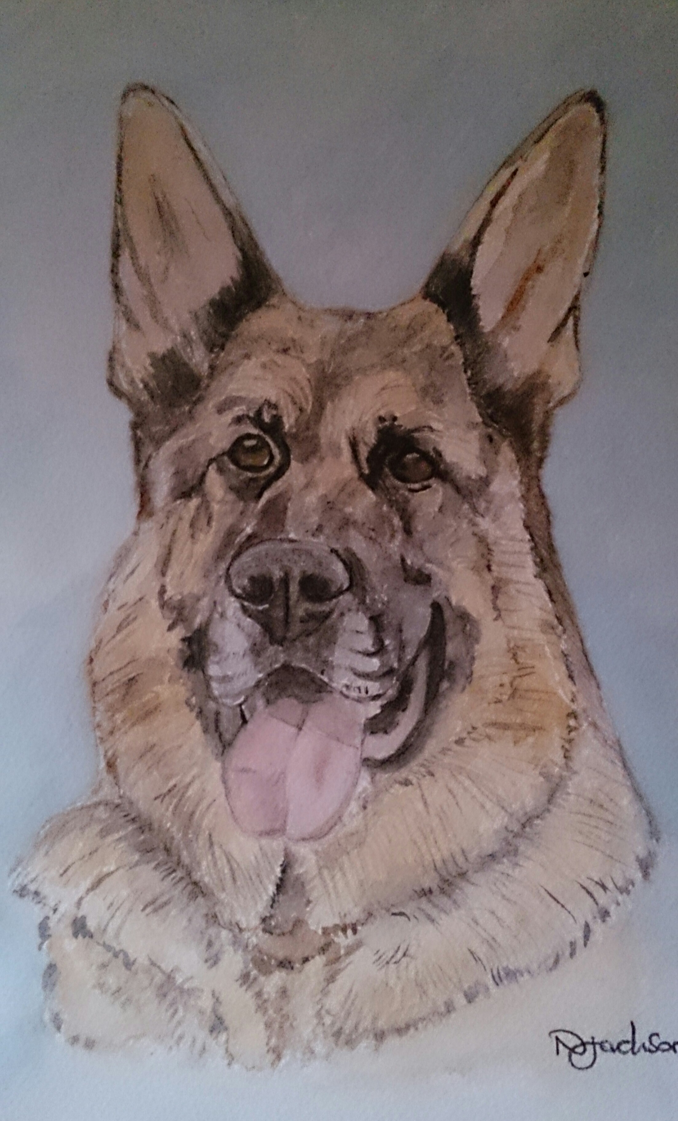 German Shepheard watercolour