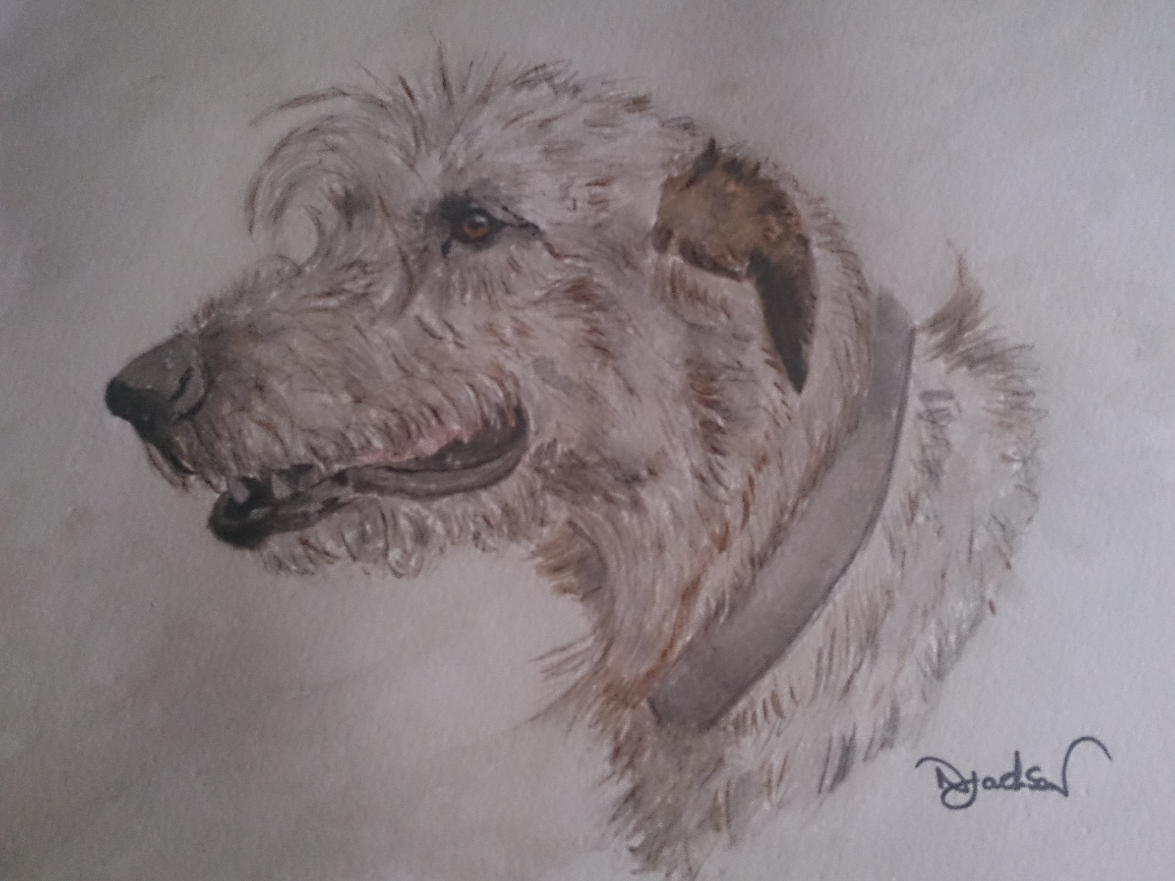 Irish wolf hound watercolour