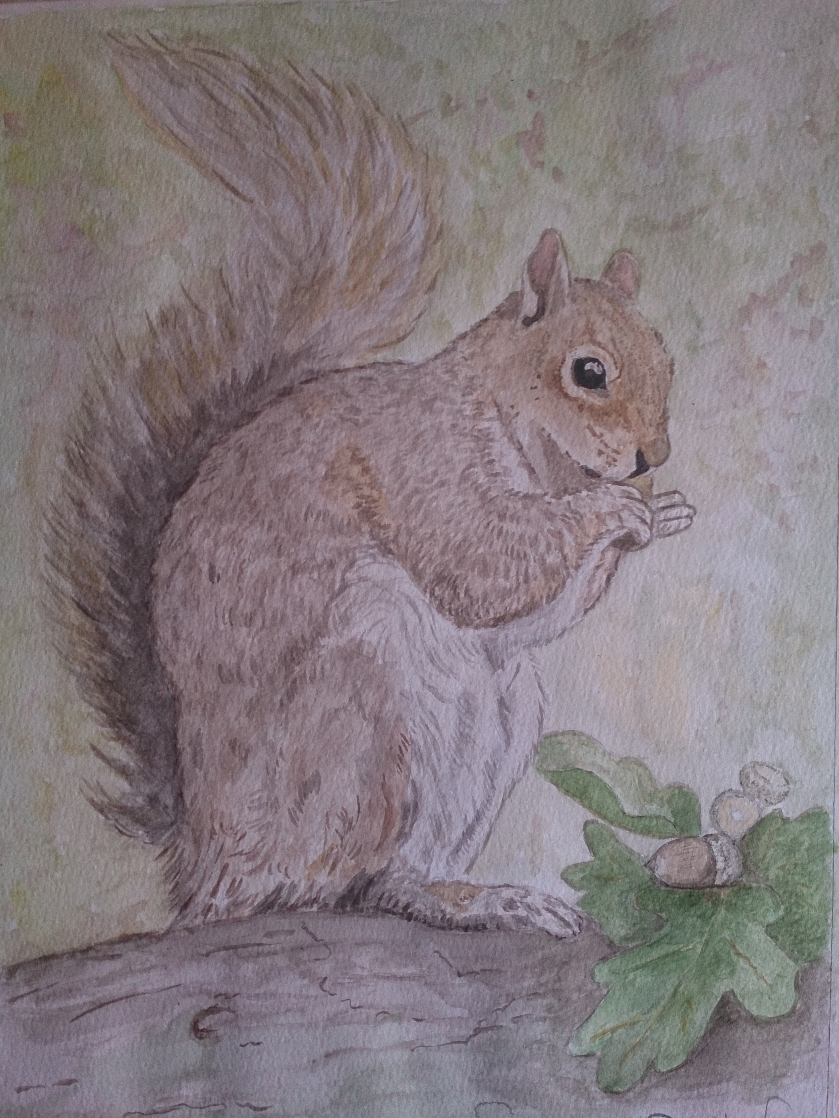 Sqirrel watercolour