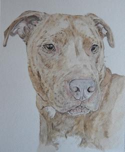 Bailey lab x shar pei watercolour.