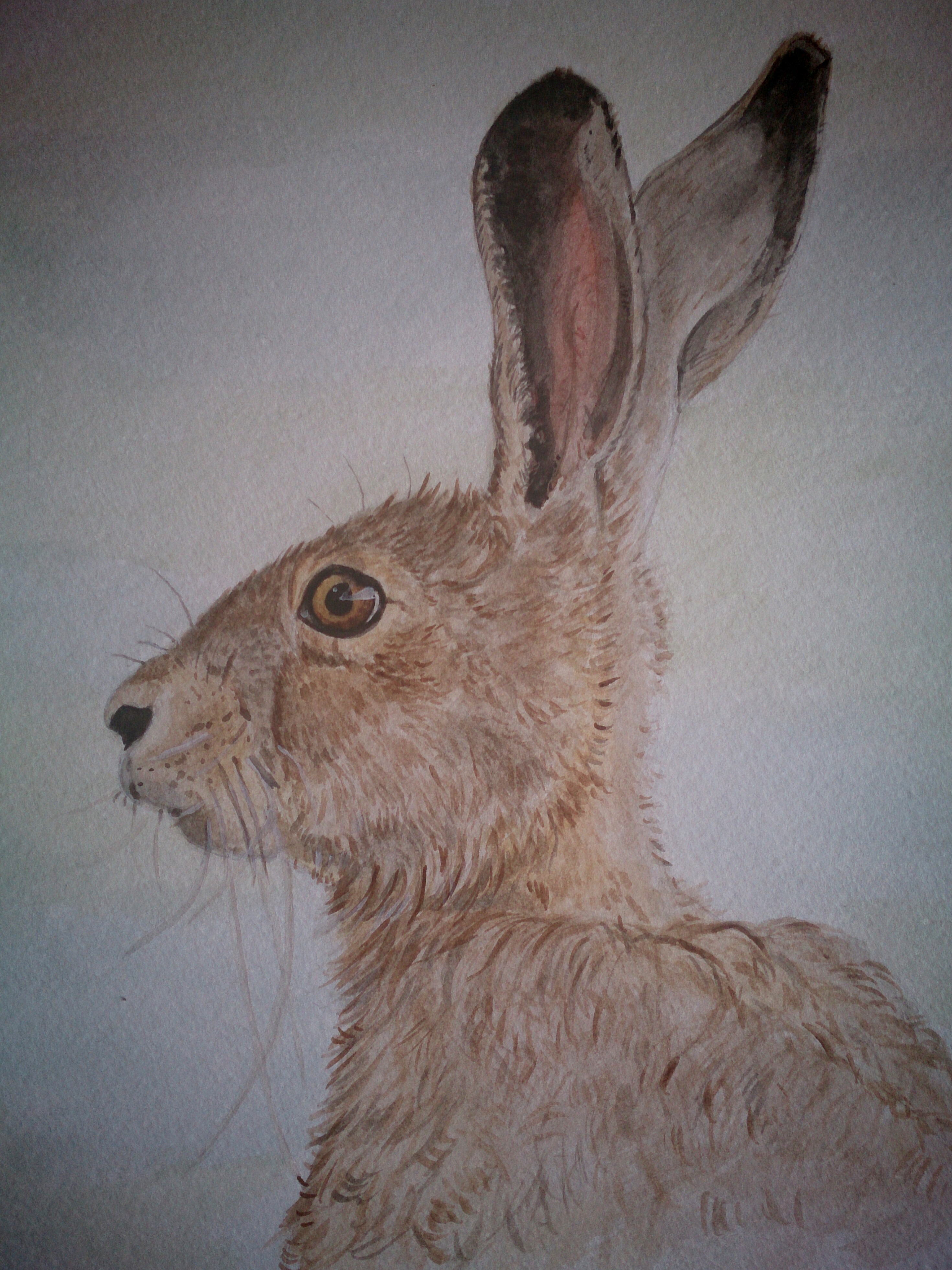 Bright eyed Hare watercolour