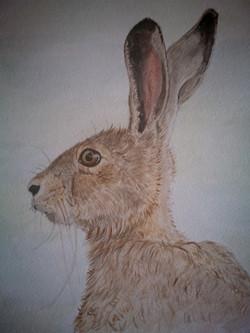 bright eyed hare portrait