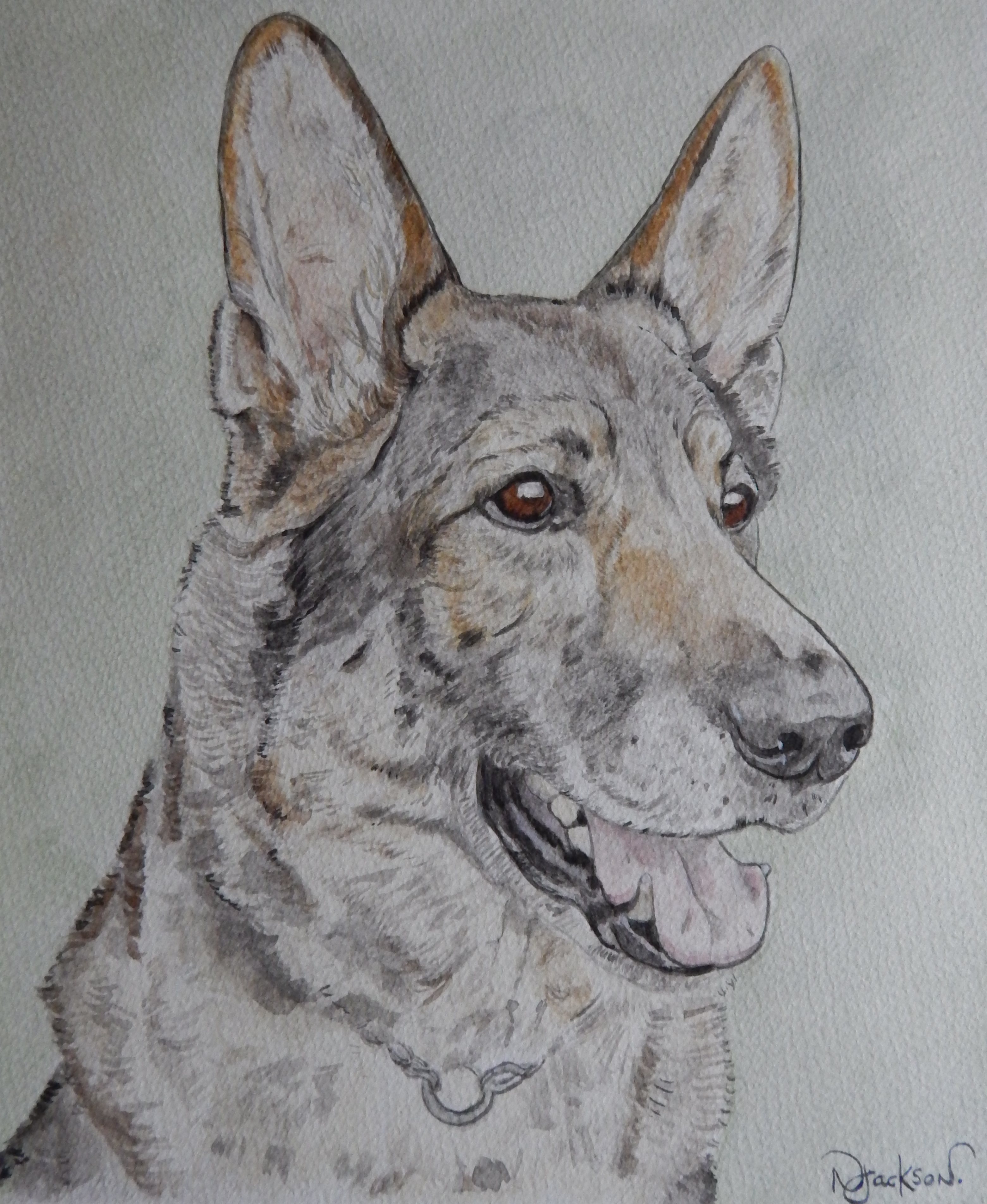 German shepherd watercolour portrait