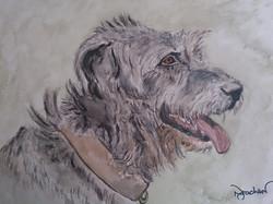 irishwolf hound dog portrait