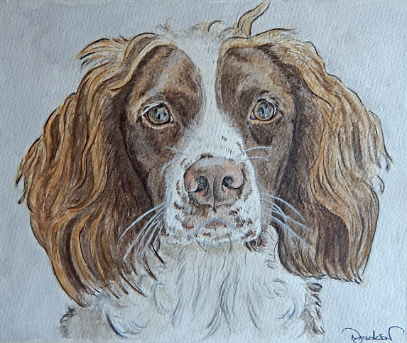 watercolour spaniel dog portrait
