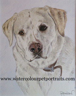 watercolour dog painting