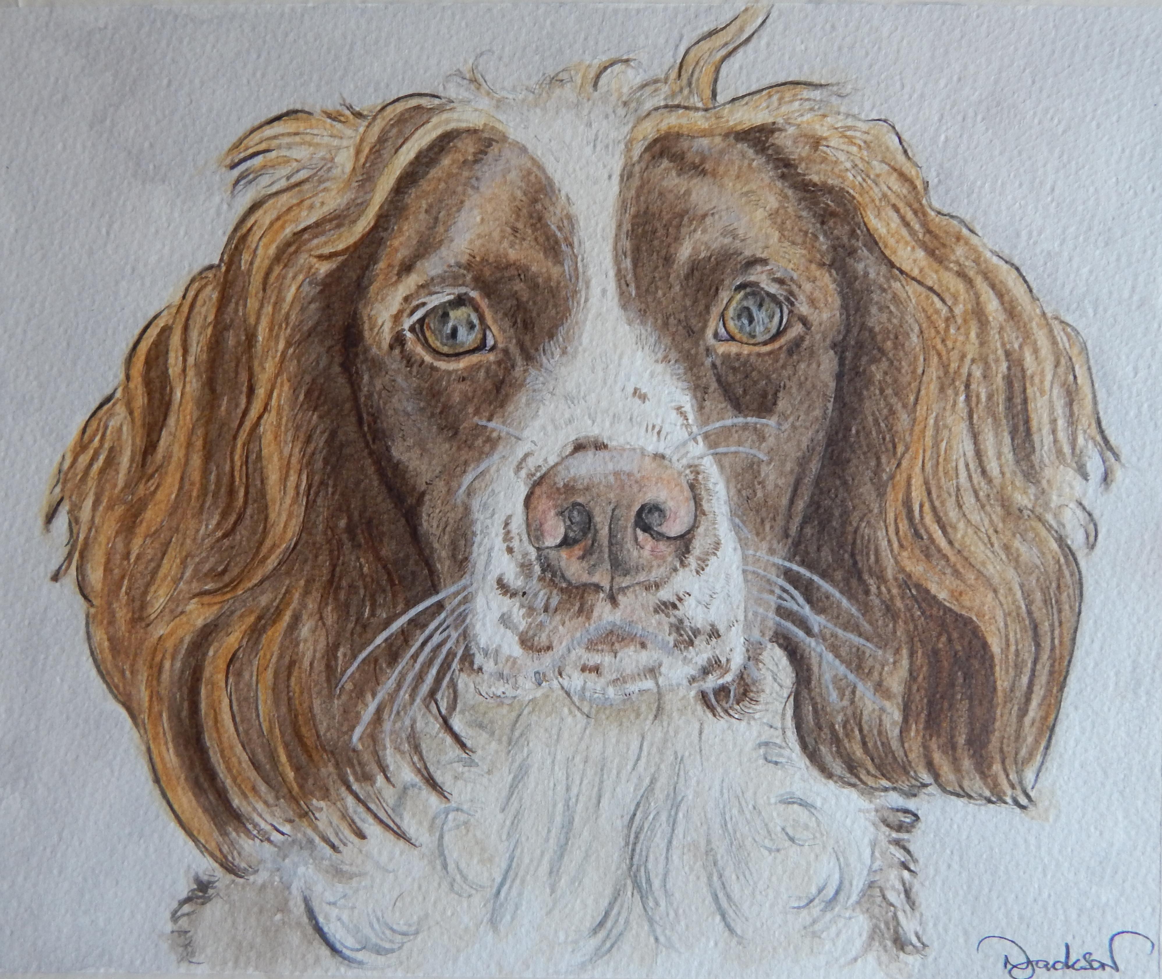 Spaniel portrait