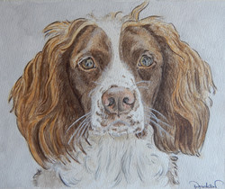"12""x10"" Spaniel watercolour portrait"