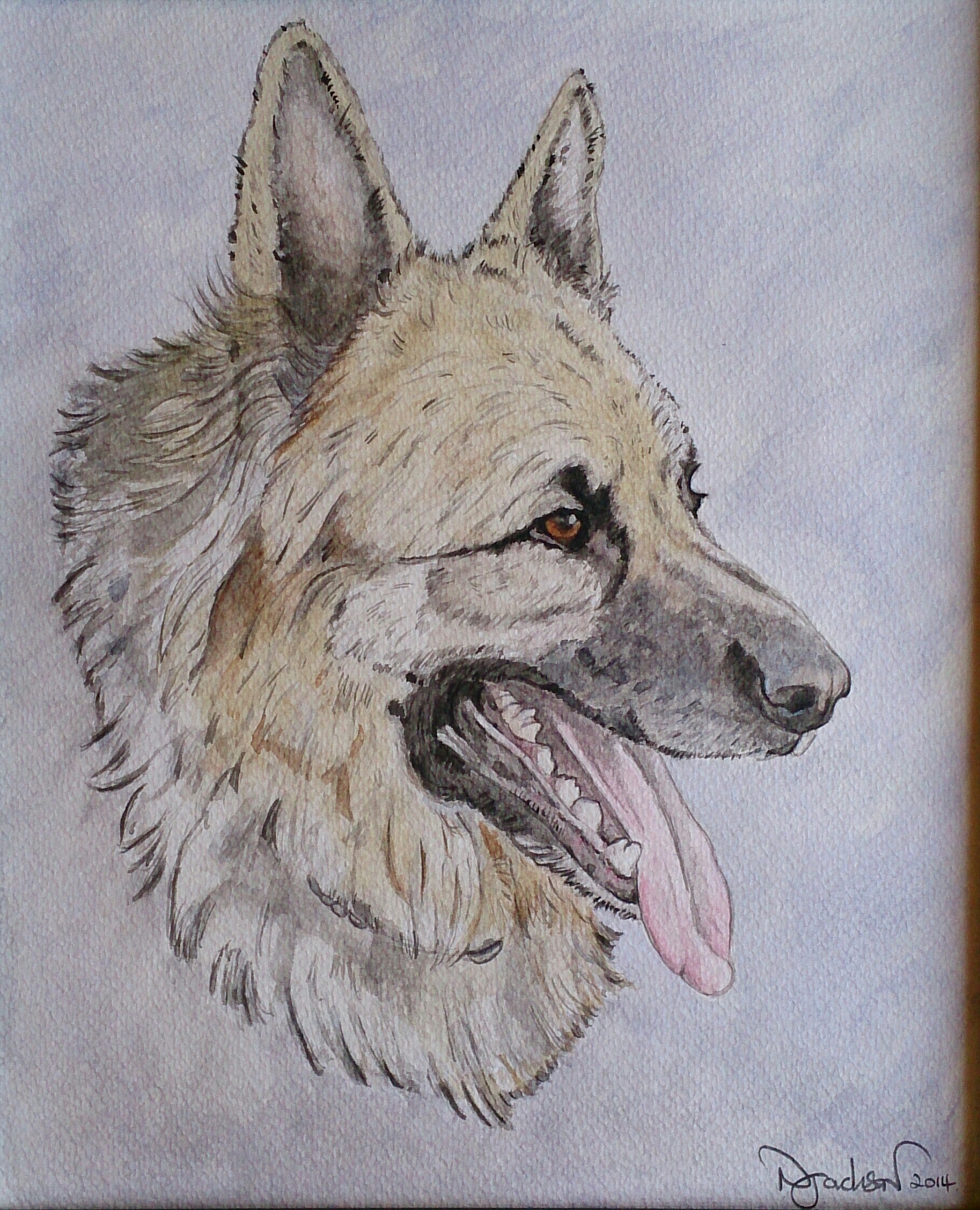 Kiser German Shepherd portrait