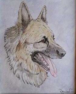 Kiser German Shepherd
