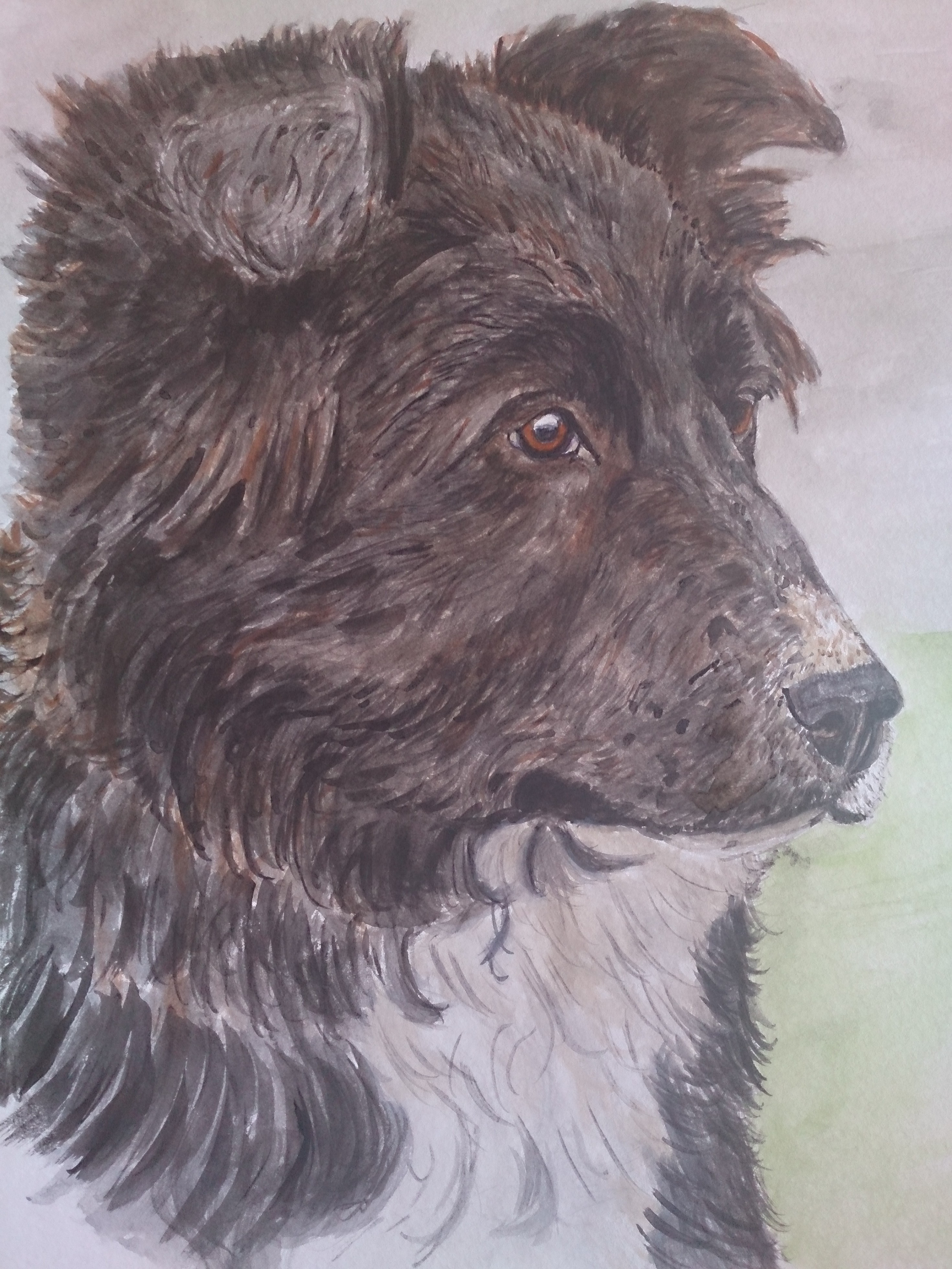 Border collie watercolour