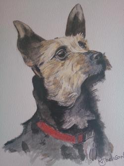 terrier watercolour portrait