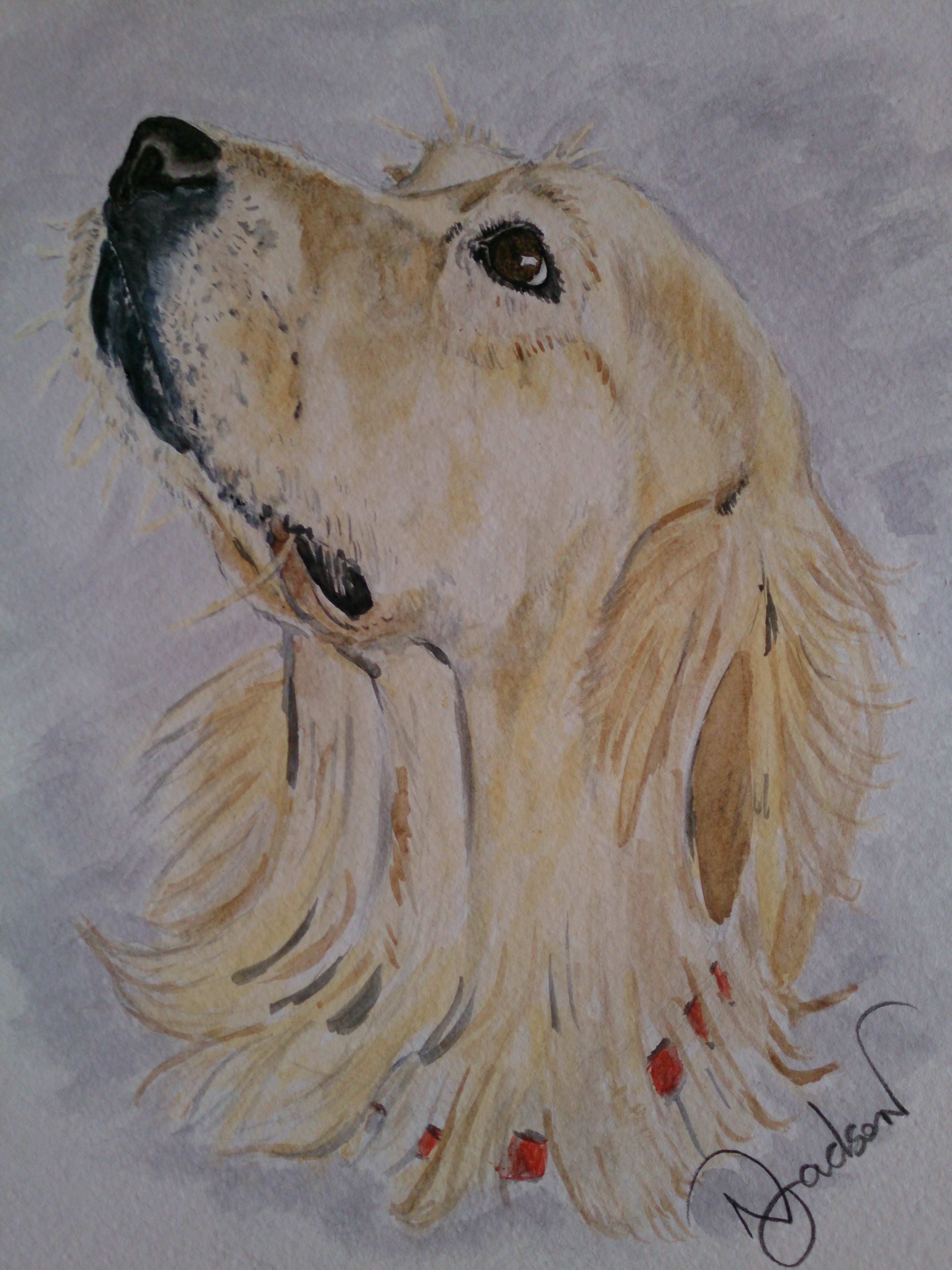 Golden Retiever watercolour
