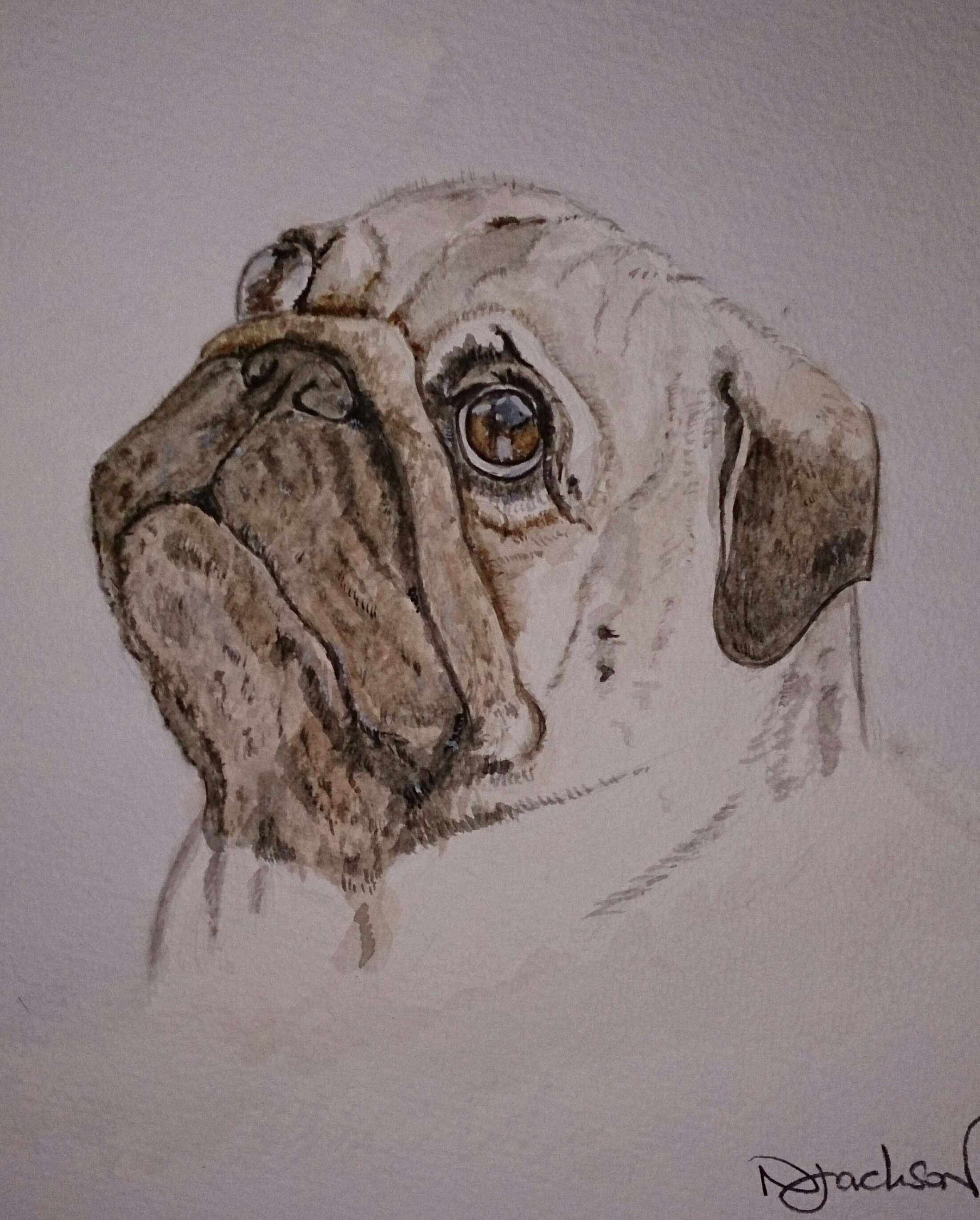 Pug dog watercolour