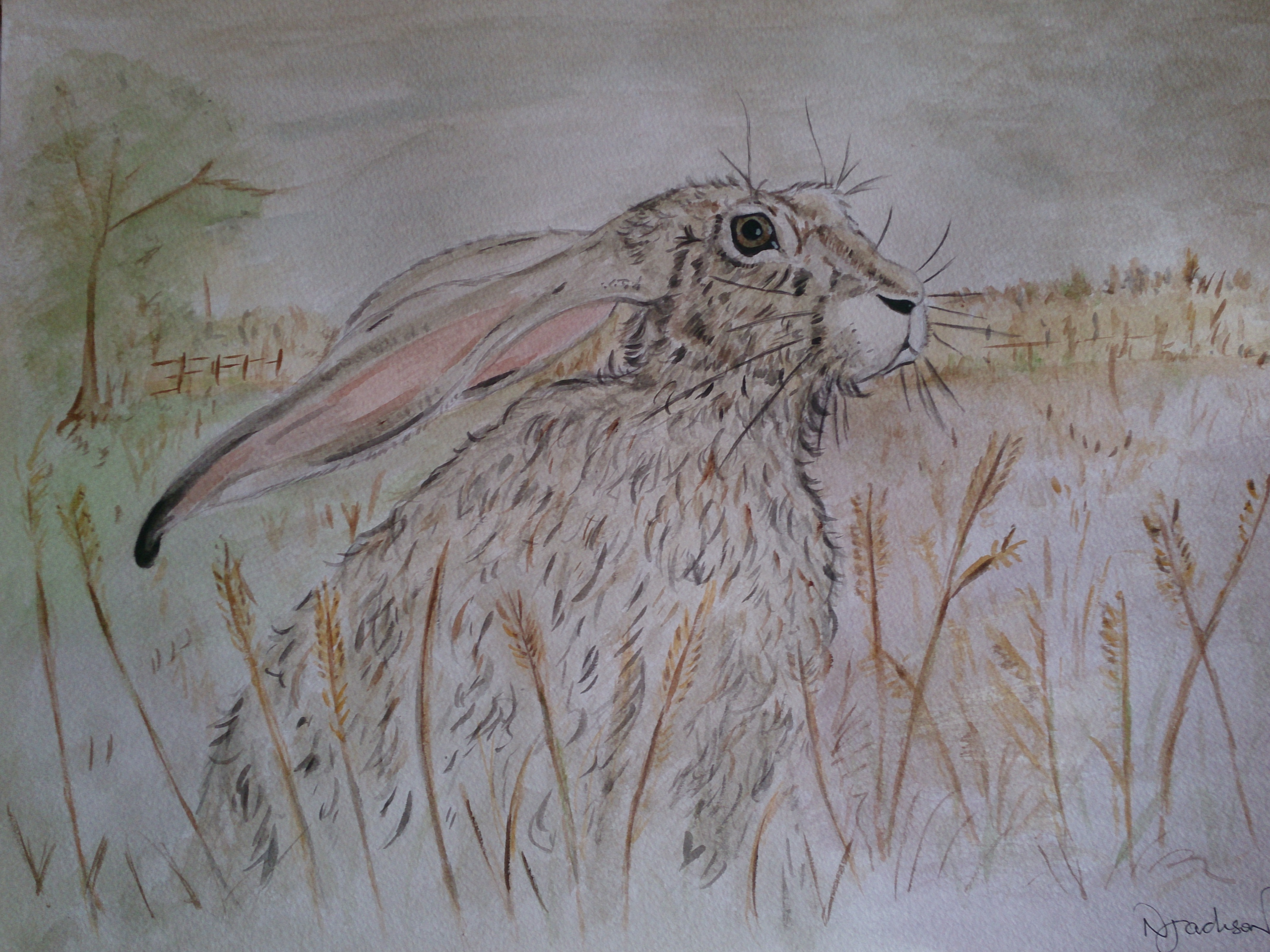Wise Old Hare watercolour