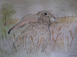 wise hare watercolour painting