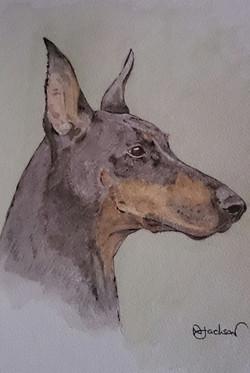 dobermain dog portrait