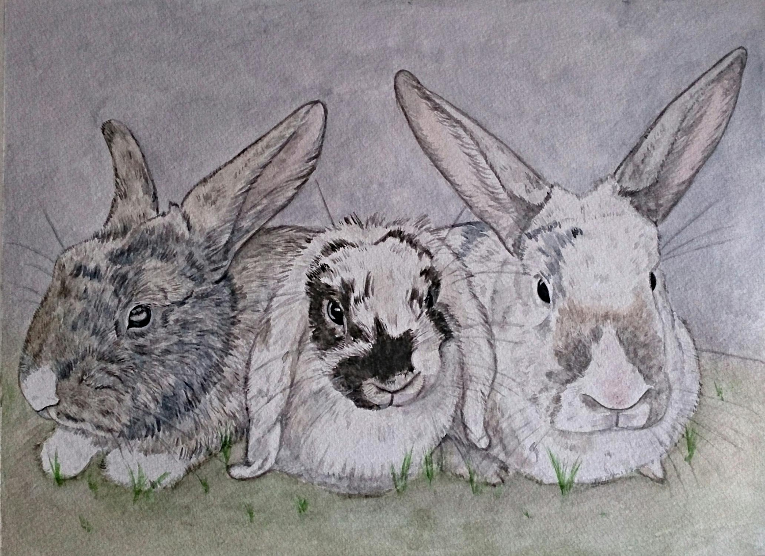 Three rabits / bunnies