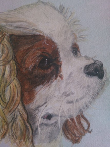 King charles spaniel watercolour