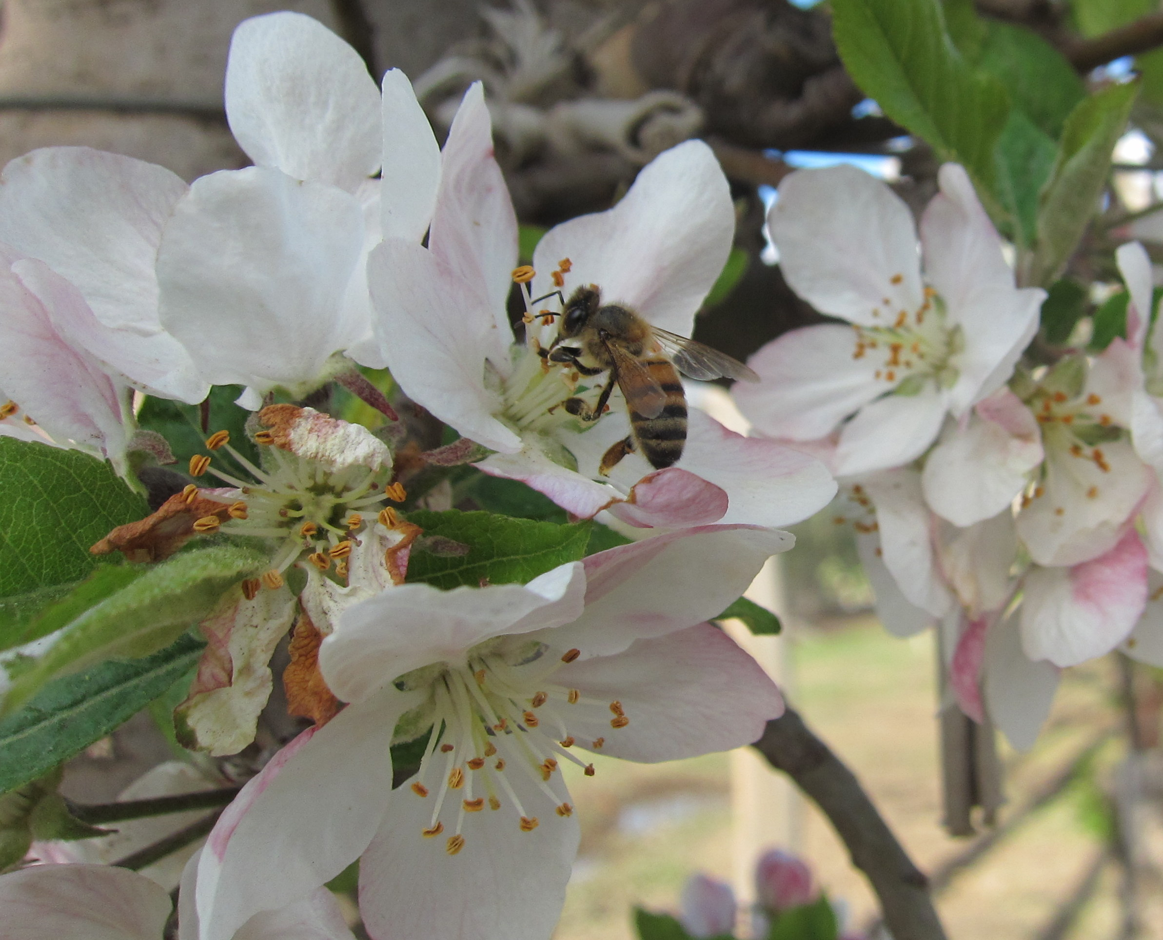 Pollinators | lucasgaribaldi