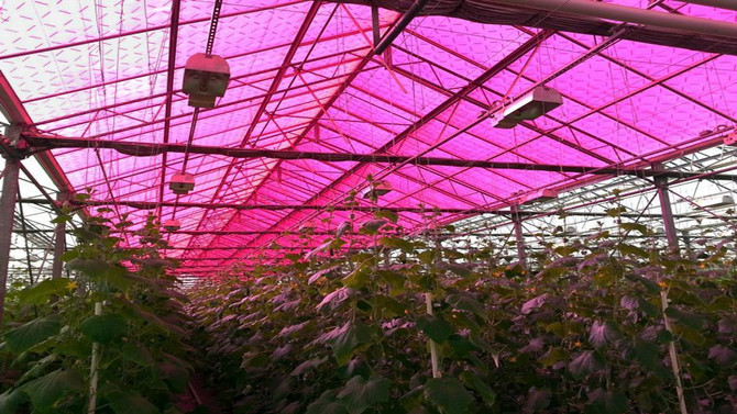 Why Greenhouse Farmers are Transitioning to Solar