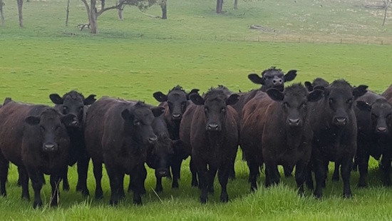 Even Cattle Farmers are Doing It