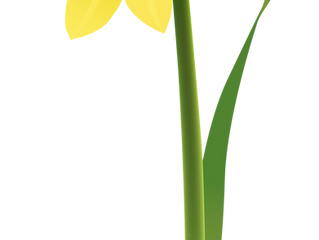 Daffodil Day Morning Tea