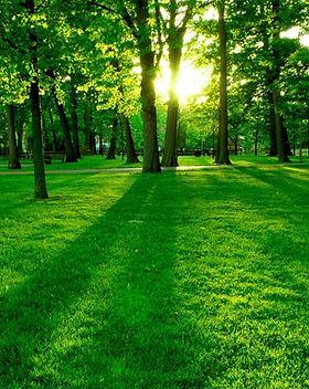 Green-Forest-Wallpaper-green-20036604-12