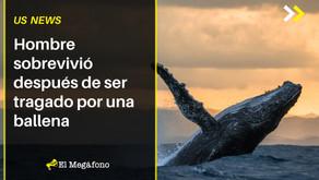 Hombre sobrevivió después de ser tragado por una ballena