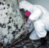 mold removal and remediation in minnesota