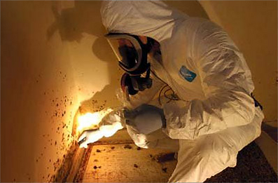 mold remediation and removal Minnesota