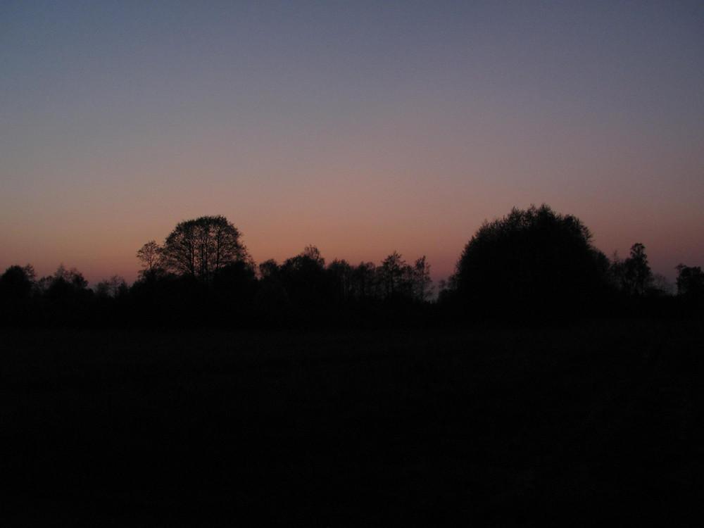 Forest Design niebo zachód słońca