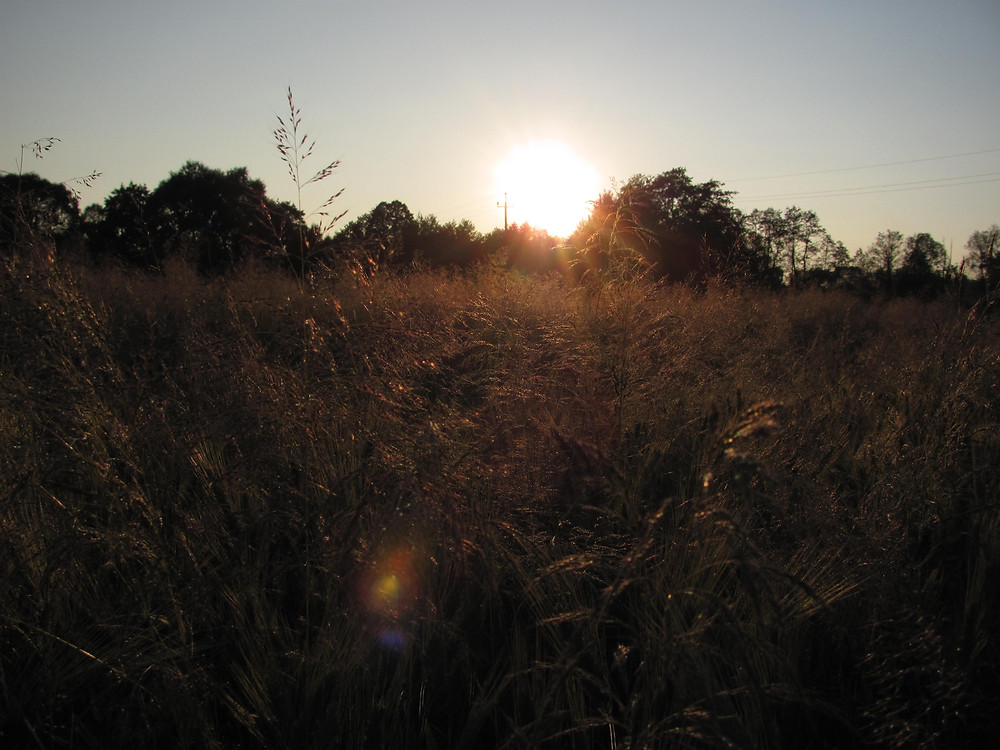 Forest Design zachód słońca pole wieś