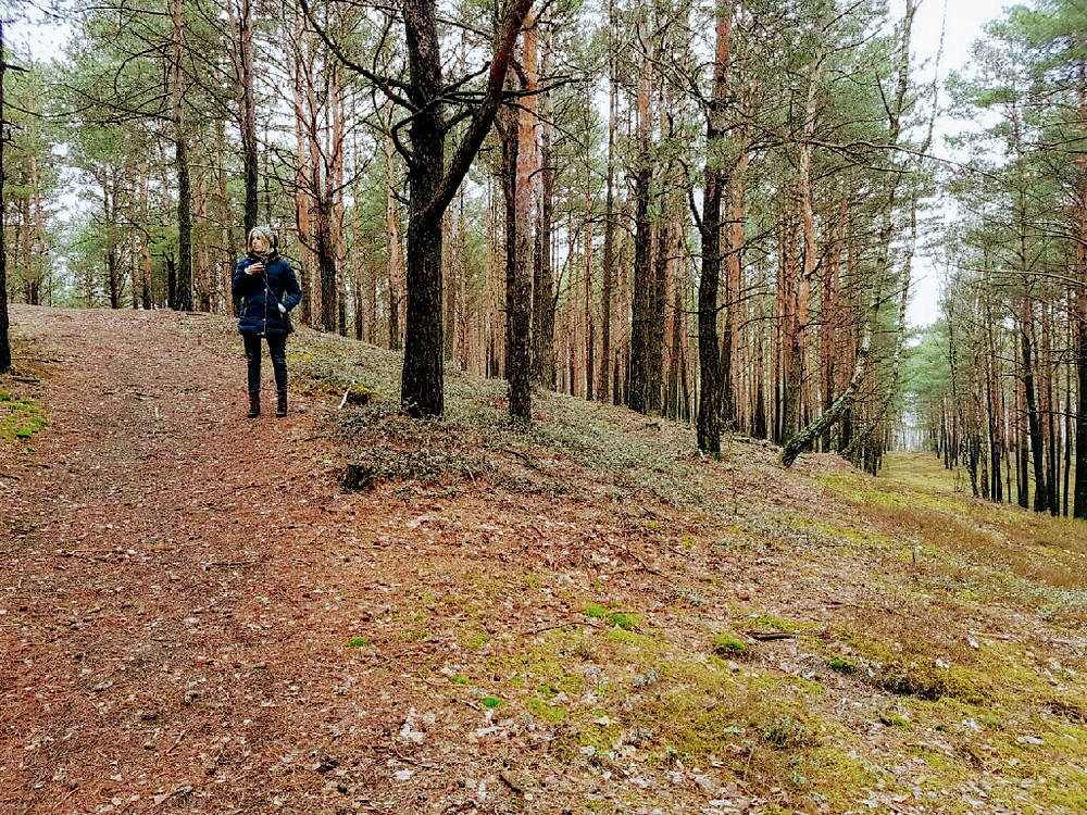 Pasmo Gór Łańcuchowych Forest Design