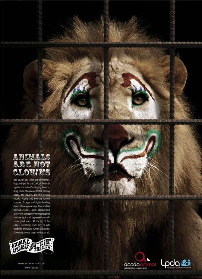 NO A Los Circos con Animales!